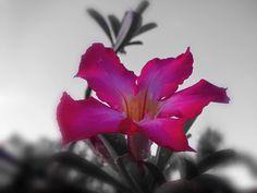 Life is way too short for bad vibes! Happy Thursday ���������� ---------------------------------------------- #enjoythelittlethings #enjoyinglife #streetphotography #streetphotographers #goodvibes #spreadlove #sunrise_flowers #flowers #flowerstagram #flowerslovers #flowersofinstagram #flower #ig #igers #ig_nature #ig_flowers #igersoftheday #phonepic #phonephotography #photoshare_everything #iphone #ipphotography #naturephotography…
