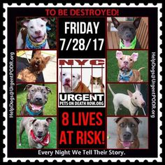 TO BE DESTROYED 07/28/17 - - Info   To rescue a Death Row Dog, Please read this:http://information.urgentpodr.org/adoption-info-and-list-of-rescues/  To view the full album, please click here:http://nycdogs.urgentpodr.org/tbd-dogs-page/ -  Click for info & Current Status: http://nycdogs.urgentpodr.org/to-be-destroyed-4915/