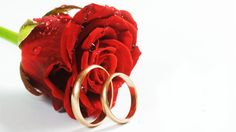 Buy wholesale flowers online for DIY Weddings & events. Order Bulk flowers online, wedding flowers, wholesale flowers direct, wholesale flowers and large varieties of fresh flowers from WholeBlossoms. Wholesale Flowers Online, Bulk Flowers Online, Happy Wedding Wishes, Wedding Greetings, Red Rose Pictures, Happy Birthday Fun, Love Scenes, Rose Wallpaper, Wedding Humor