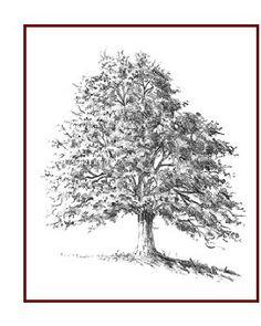Tutoriel pour dessiner des arbres - drawing Trees