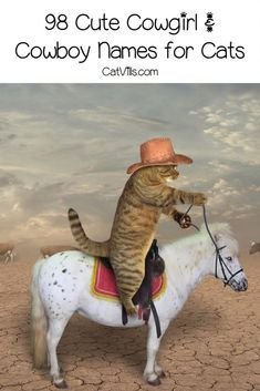 Looking for a great cowboy cat names for your new little one? Check out our list! Don't worry, we included plenty for cowgirl kitties, too! Girl Cat Names, Cute Cat Names, Cowboy Names, Jessie Toy Story, Cat Mandala, Western Comics, Scared Cat, Brown Cat, Unique Cats