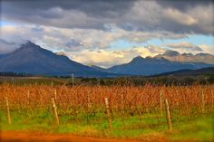 Stellenbosch - South African Wine Country