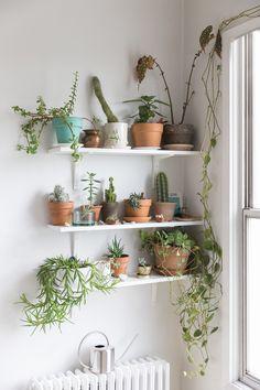 Plant Wall Interior Decor