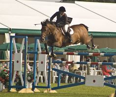 I love Horse Show Jumping. If I could compete in anything this would be it. I miss it and riding in general