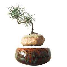 New Arrival - Amazing Magnetic Levitation Bonsai Tree Planter Bonsai Plants, Potted Plants, Plant Pots, Decorative Items, Decorative Bowls, Floating Plants, Different Seasons, Types Of Plants, Green Plants