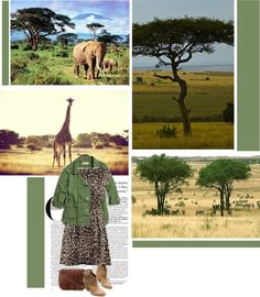 """""""African Savannah"""" by rainbowlover4 ❤ liked on Polyvore"""