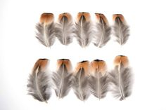 10 x Natural Cock Pheasant Brown  Black by TheArtofRegressing