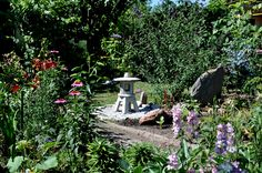 Garden butterfly bush - RS FOTO