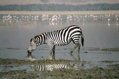 Tanzania Safari, Tours, Africa Travel, Animals, Animales, Animaux, Animal Memes, Animal, Animais
