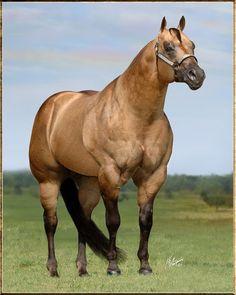 KIDS CLASSIC STYLE 1996 AQHA Bucksin Stallion Sire: kid Clu ~ Dam: Tootsy Rolls Redform TWO TIME AQHA WORLD CHAMPION STALLION MULTIPLE AQHA WORLD & CONGRESS CHAMPION SIRE