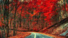 Herbst, Straße, Bäume, Laub, rote Blätter