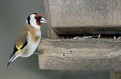 BirdLife Suomi - Talviruokinta