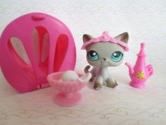 Shorthair cat (pets around the world ) omfg want it soooooooooo badly!!!!!!!!!!!!