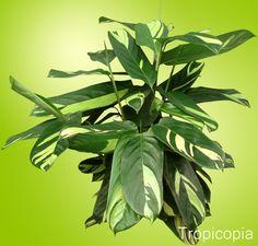 Image result for green patterned leaf plants