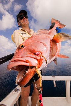 Maldives Islands, Indian Ocean. Beautiful Coral Trout (Indo-Pacific grouper) caught on jig. Subject lit with bare SB600 by Nicola Zingarelli