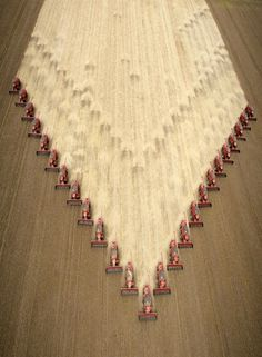 Awesome Picture..25 Combines Harvesting The Field At Same Time