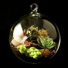 Tiny succulent terrarium garden. :)