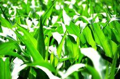 Tipos de adubos e dicas para manter a saúde da sua planta!