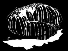 HOWARD SCHATZ: LIQUID LIGHT SERIES