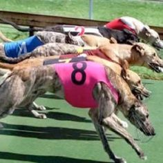 Pensacola Greyhound Track and Poker Room