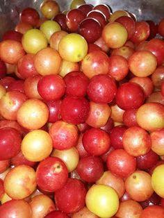 dinaniitrecuti.blogspot.com: Dulceață de corcodușe Plum, Apple, Fruit, Vegetables, Food, Apple Fruit, Essen, Vegetable Recipes, Meals