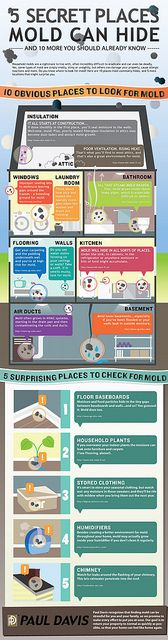 Mold infographic by mindovermediallc, via Flickr