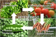A Te kertedben is lehet vetésforgó! Green Garden, Herb Garden, Vegetable Garden, Garden Plants, Home And Garden, Fruits And Vegetables, Veggies, Lush Green, Garden Projects