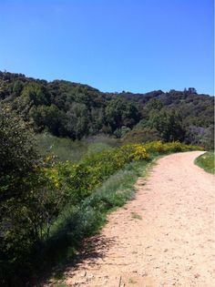 Pat C at Leona Canyon Regional Open Space Preserve 'Wild flowers are in bloom' (Oakland, USA)