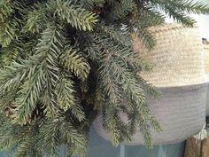 #mercadoloftstore #mls #umseisum #coroa #pine #nature #easter #páscoa #season #cesto #basket #nature #charriot #inspire #picture #materials #shape #colour #mood