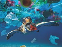 1000 Piece Jigsaw Puzzle (other products available) - Turtle eating a plastic cup drifting in the middle Date: - Image supplied by Ardea Wildlife Pets Environment - 1000 Piece Jigsaw Puzzle made to order in the UK Fine Art Prints, Framed Prints, Canvas Prints, Great Pacific Garbage Patch, Plastic Pollution, Poster Size Prints, Photo Greeting Cards, Evolution, 4 Oceans