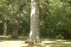 a  symmetry of a tree