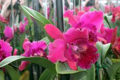 Taking their cue from the Surrealist artists, the Atlanta Botanical Garden highlights the exotic orchid.