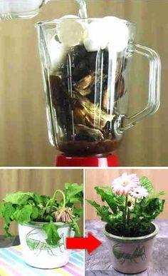 Echa solo 3 cosas a tus plantas sin vida, y ellas crecerán como locas #plantas #abono #fertilizante