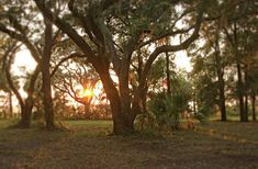 Bull Point is a waterfront Lowcounty paradise with 750 Acres Spanish Moss, New Home Builders, We Fall In Love, Oak Tree, East Coast, South Carolina, Acre, Serenity, Coastal