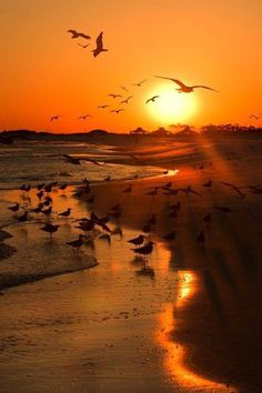 Seagulls at the sunset beach. // For premium canvas prints & posters check us out at www.palaceprints.com