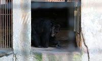 """""""O GRITO DO BICHO"""": Em meio a impasse, animais do zoo do Recife são as..."""