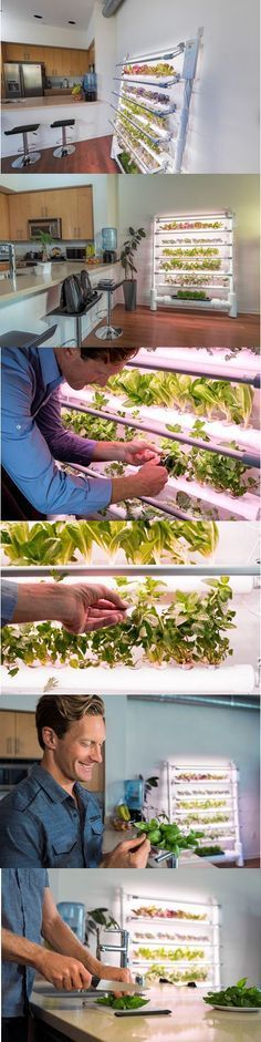 The new GrowWall is designed to grow up to 75 herbs, fruits or vegetables at the same time, displayed on five levels for a nice touch to the passionate home gardener's indoor ambience. It's the only all-in-one hydroponic growing system that can produce a yield this high. Learn more at opcomfarm.com. #hydroponicsorganic