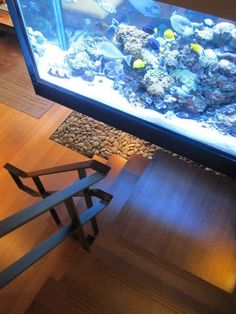 An actual fish tank as a wall aquariums saltwater fish for Well water for fish tank