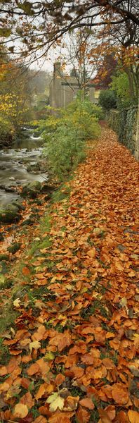 """""""Leaves On The Grass In Autumn, Sneaton, North Yorkshire, England, United Kingdom"""" by Panoramic Images"""