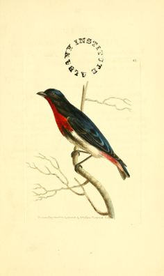 v 1 (1814) - The zoological miscellany : - Biodiversity Heritage Library / Smithsonian Library