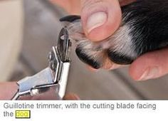 Trimming Your Dog's Nails | ASPCA some good reminders on how to prep and go about things smoothly