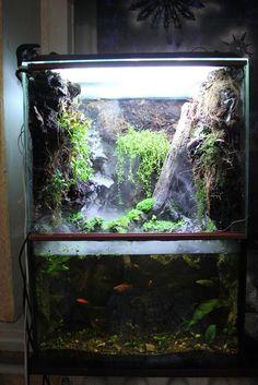 Палюдариум: инструкция создания, фото-видео пример. НЕ МОЁ. Палюдариум, аквариум, фото, видео, текст, Рыба, вода, длиннопост