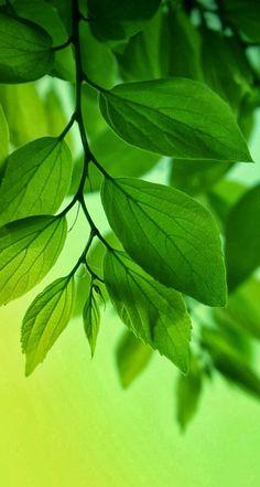 Nature aesthetic green background 28 Ideas – Best Home Plants Green Nature Wallpaper, Desktop Background Nature, Colorful Wallpaper, Trendy Wallpaper, Green Backgrounds, Wallpaper Backgrounds, Iphone Wallpaper, Green Carnation, Nature Aesthetic