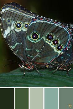 ZJ Colour Palette 107 #colourpalette #colourinspiration