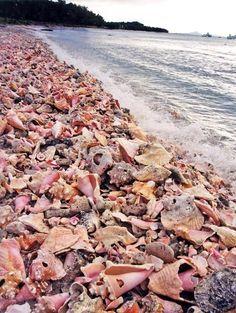 Moonhole Beach with Shells on Bequia Island: http://beachblissliving.com/caribbean-eco-stone-house-rentals-bequia/