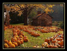 The Pumpkin Farm by Bridges