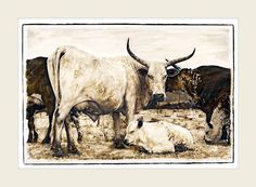 Nguni cattle - Nguni Gathering - Marlene Neumann Fine Art Photography  www.marleneneumann.com  neumann@worldonline.co.za
