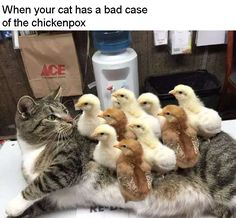 Hahahaha# look at the expression on the cat's face!