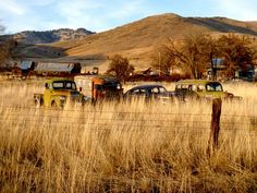 Group of old, rusty cars parked in an open, grassy field in the country.