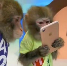 Funny Profile Pictures, Reaction Pictures, Funny Pictures, Cute Baby Monkey, Pet Monkey, Fb Memes, Funny Memes, Monkey Memes, Monkey Pictures
